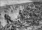 Holocaust15