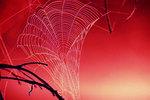 Tangled_web_1