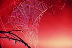 Tangled_web_edited_1
